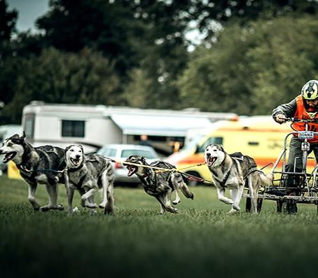 Schlittenhunde Trainingslager: Baltic Dog Days 2020
