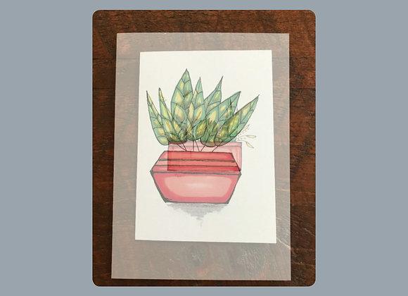 "Plant Prints (5""x7"") Print/Card $8 ea"