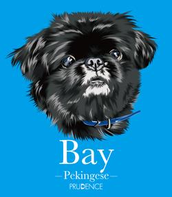 Bay_4