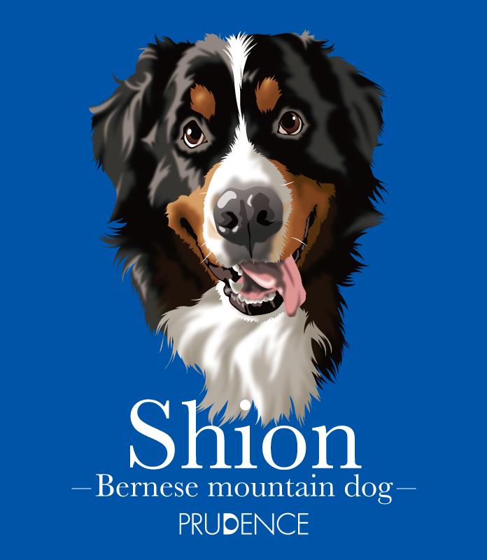 shion_1