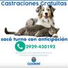 CONTINÚA LA CAMPAÑA DE CASTRACIONES GRATUITAS EN TODO EL DISTRITO