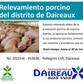 RELEVAMIENTO PORCINO EN EL DISTRITO DE DAIREAUX