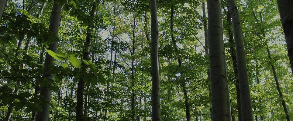 Leafy-Green-Forest.jpg
