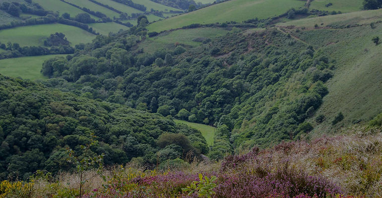 Exmoor-View-Background.jpg