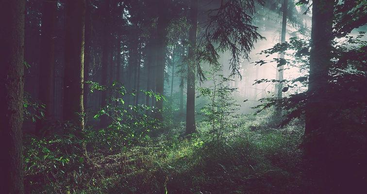 Foggy-Forest-Measure.jpg