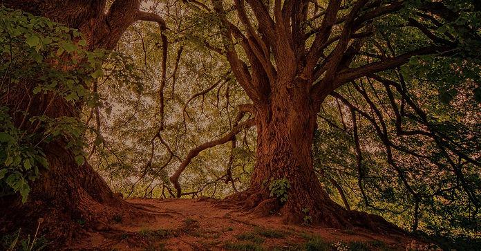 Large-Trees-Forest-v2.jpg