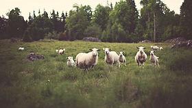 Contact_us | Honey Brook | Across Country Sheep Farm