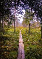 Vandra i en stilla skog