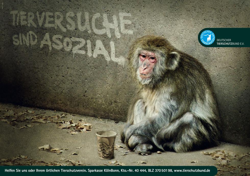 Motive für den Deutschen Tierschutzbund