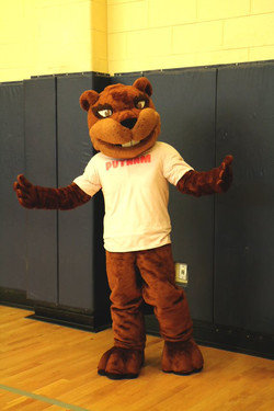 Beaver.jfif