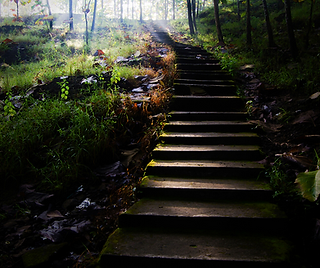 Moss covered stairs in a forest.