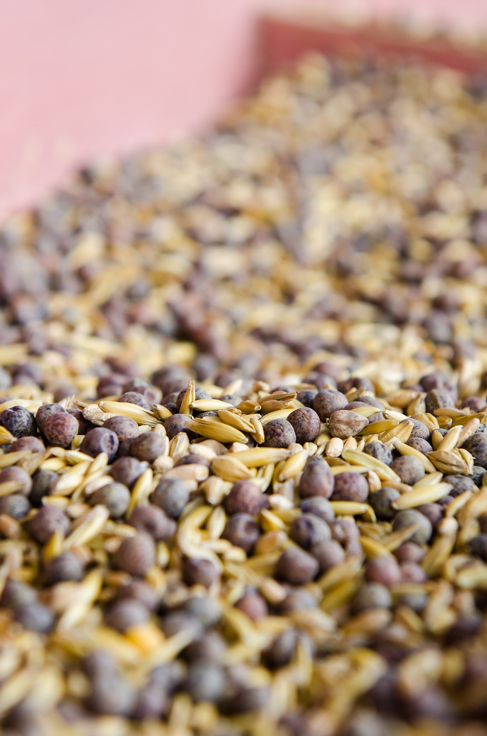 cover crop seed