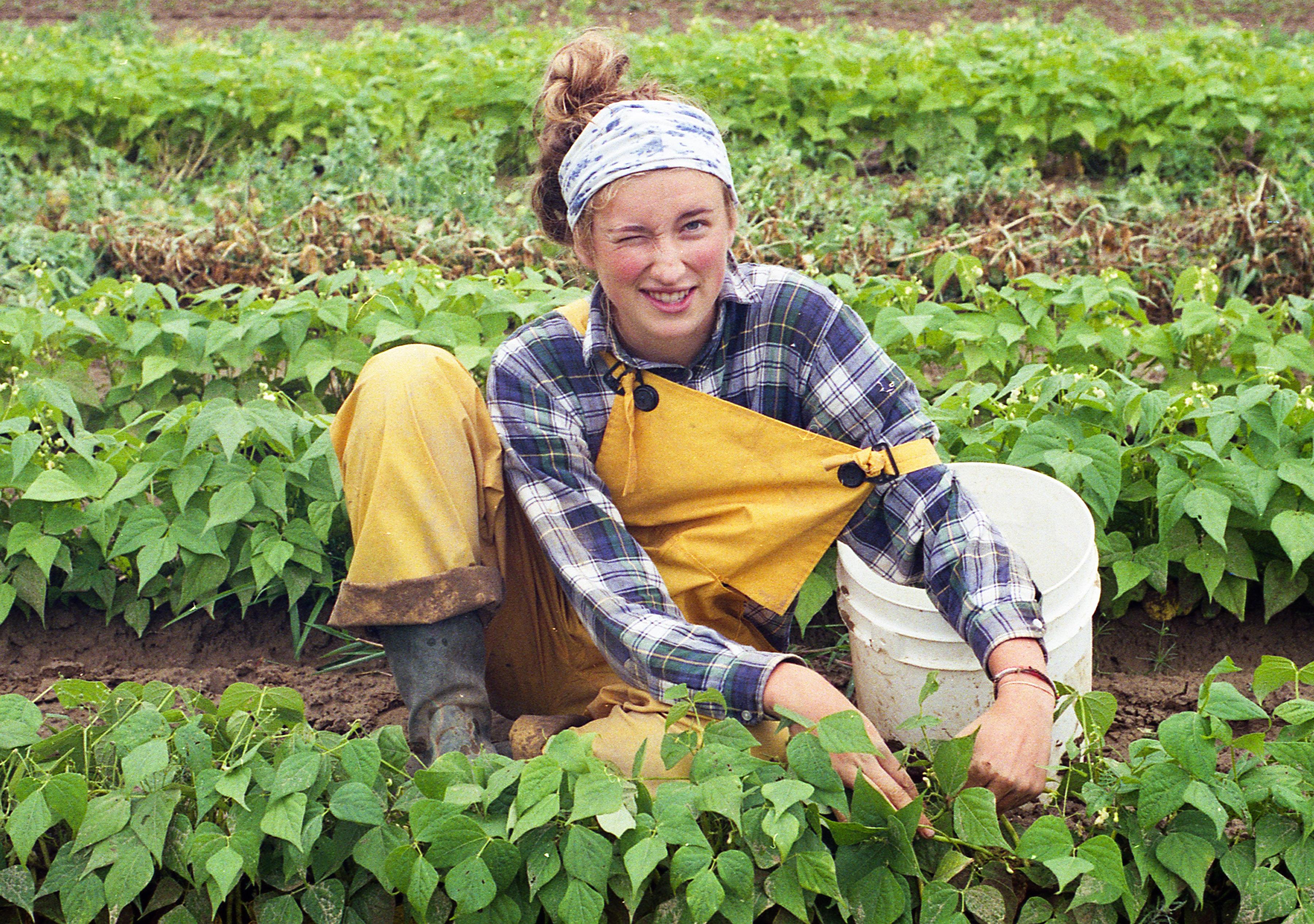 maine farmer bean picker