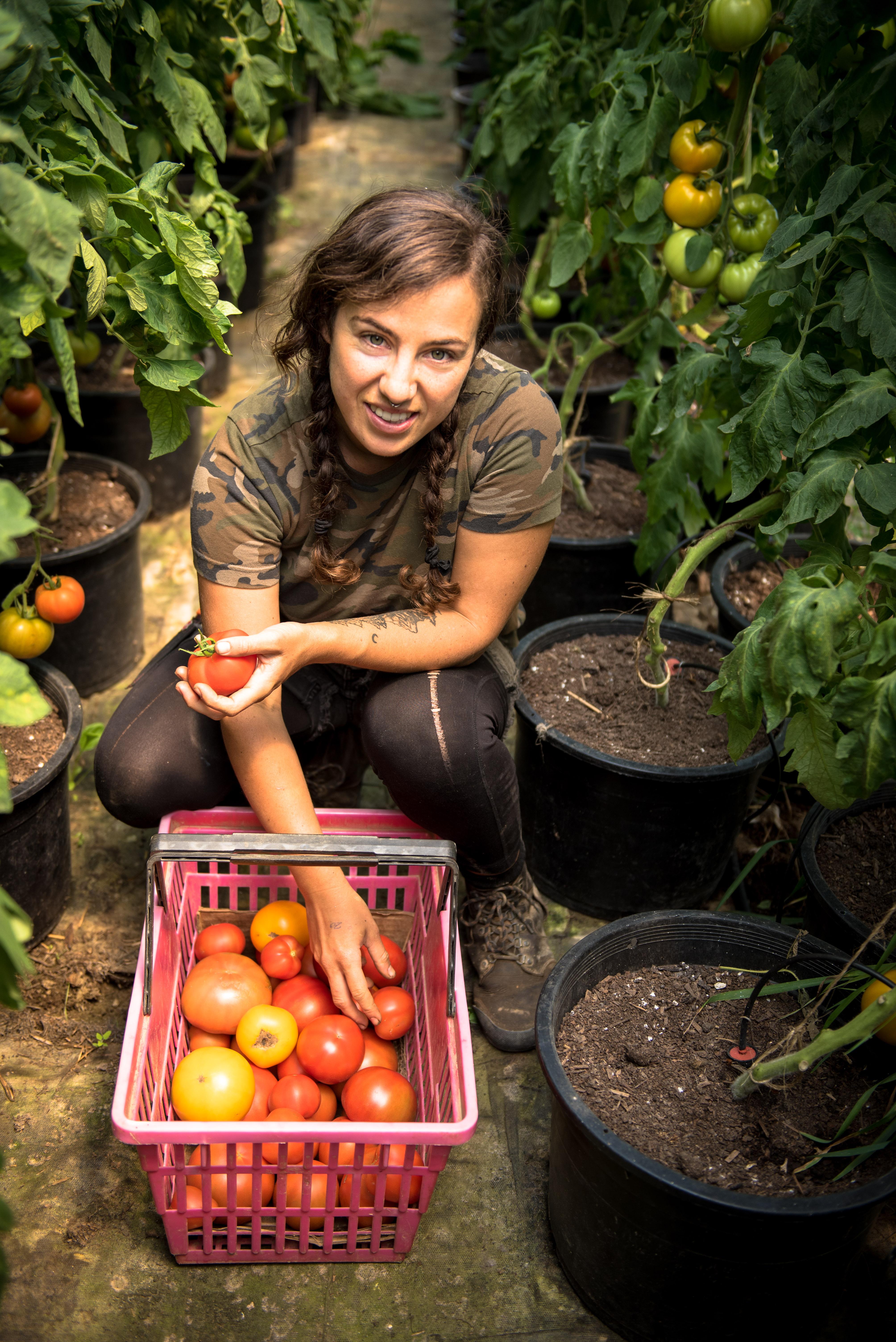 Maine Tomatoes
