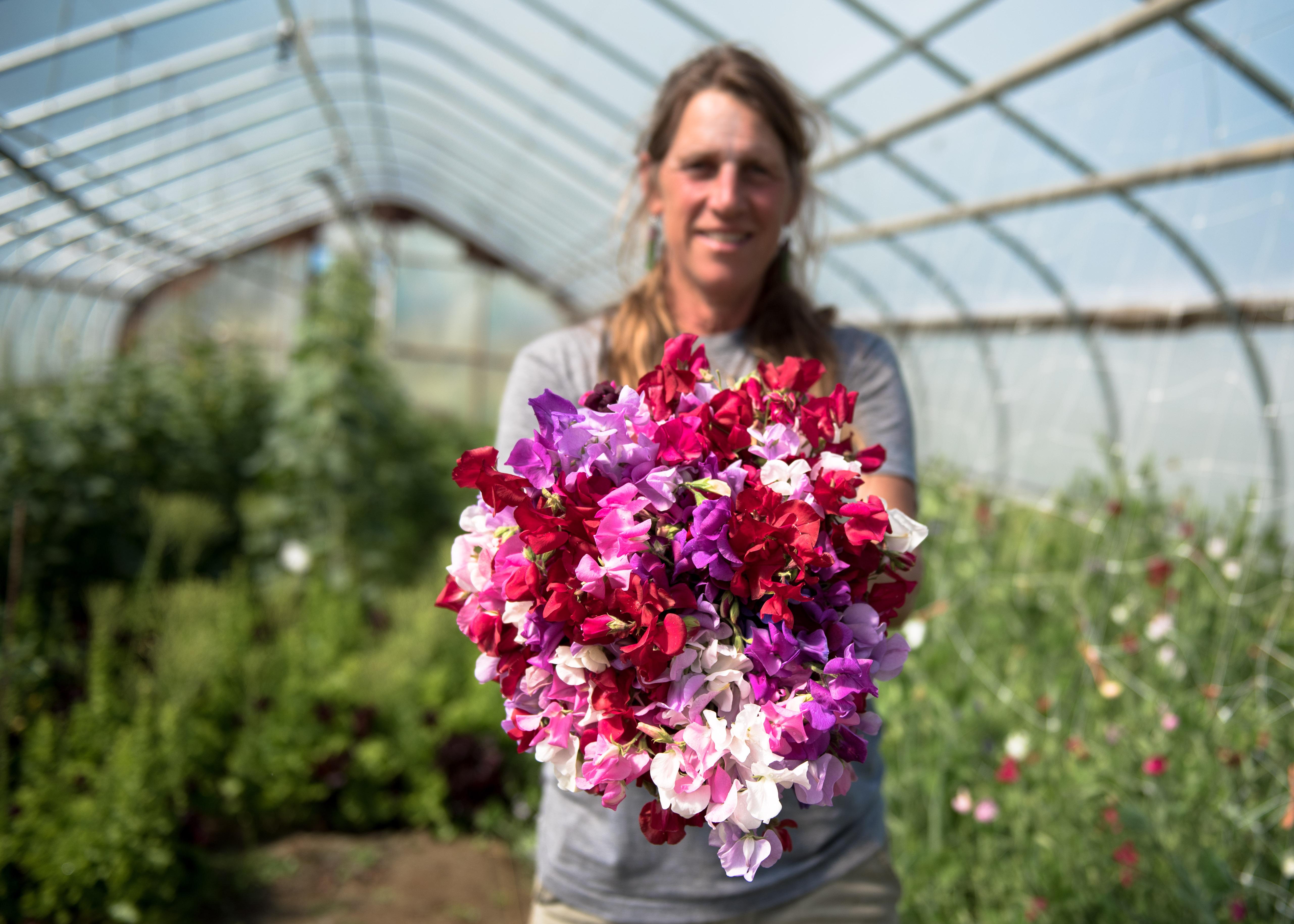 Jan Goranson harvesting flowers