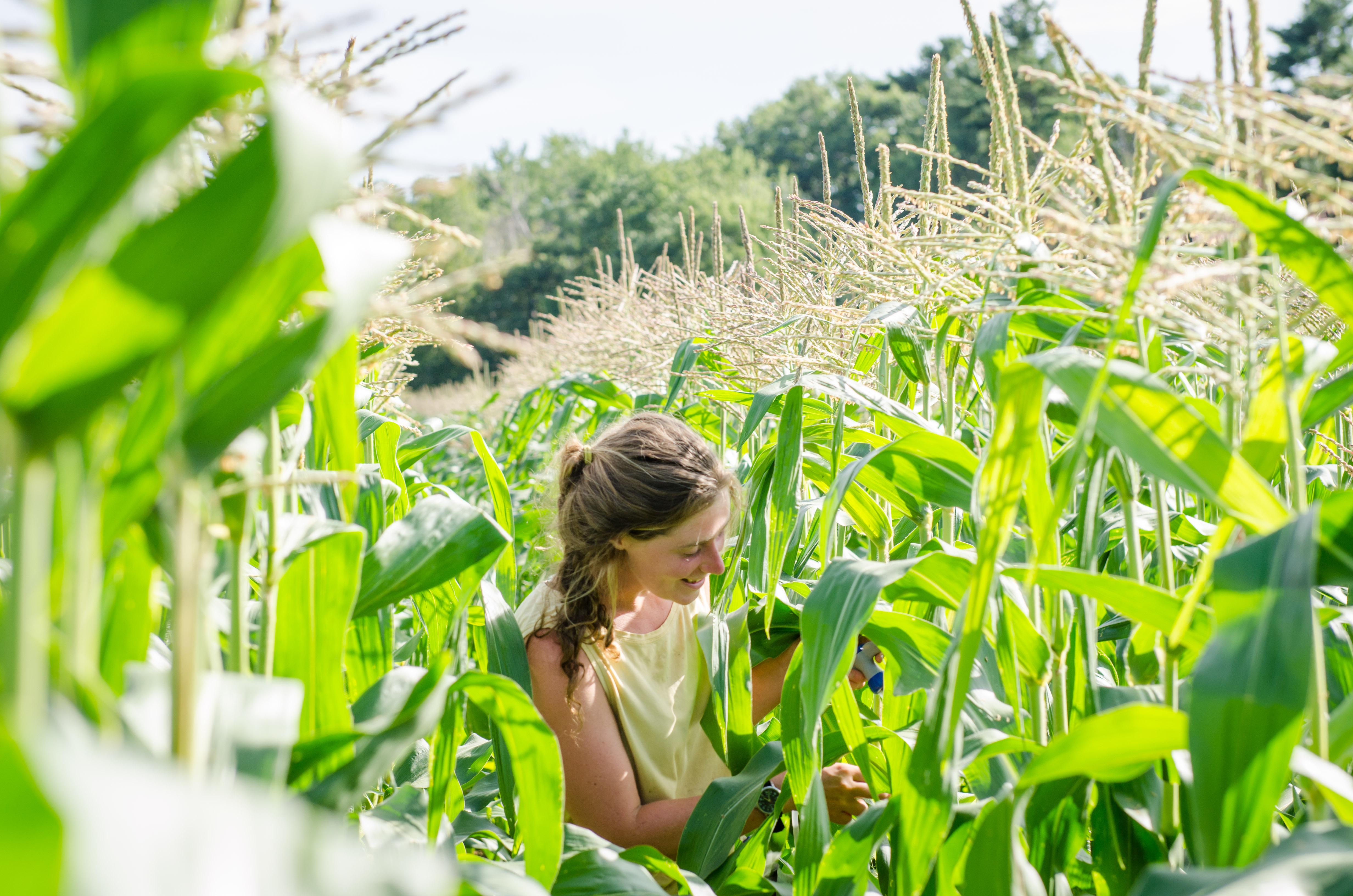 Maine farm girl, maine corn