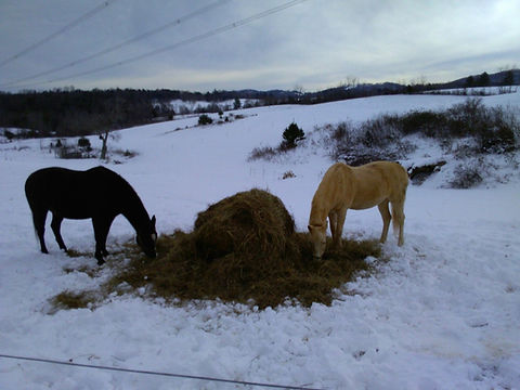 horses winter dinner_edited.jpg
