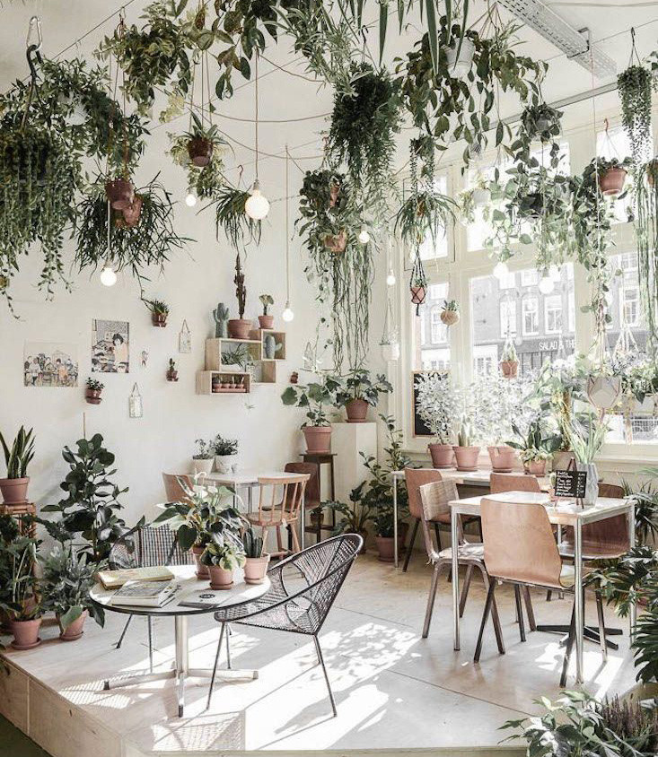 Trending on Gardenista_ The Indoor Garde