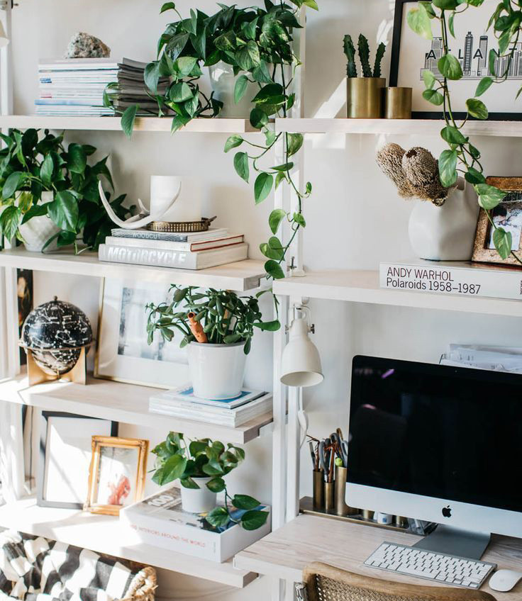Office space full of life (and greenery)