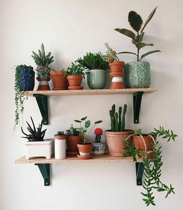 Pflanzen im Regal - #roomdekorCheap #roo