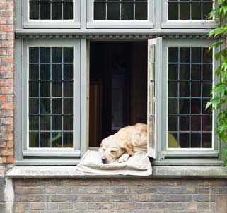dog-in-window-PEZB93M_web.jpg