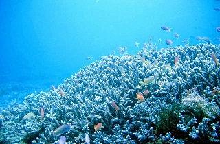 サンゴの周りを泳ぐ魚