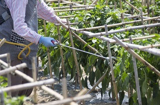 農作物に農薬を散布する女性
