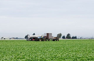 広い畑の中を走るトラクター