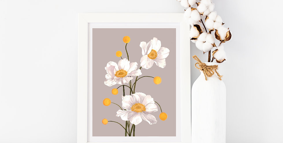 White Poppy | Gray Background