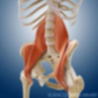 hamstring and lower back release