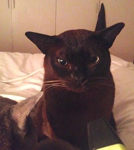 Herbert The Cat.jpg