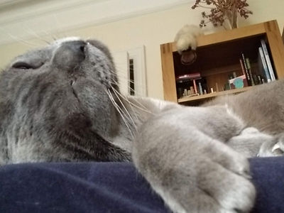Mattie the Cat.jpeg