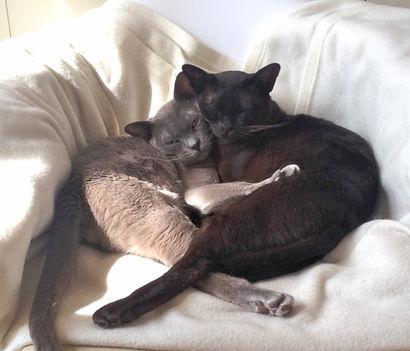 Cats at the Holistic Ballet studio.jpg