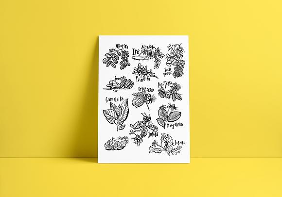 Flores do Cerrado - A3