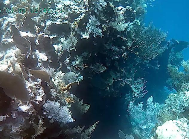 Fantastic diving on Utila.