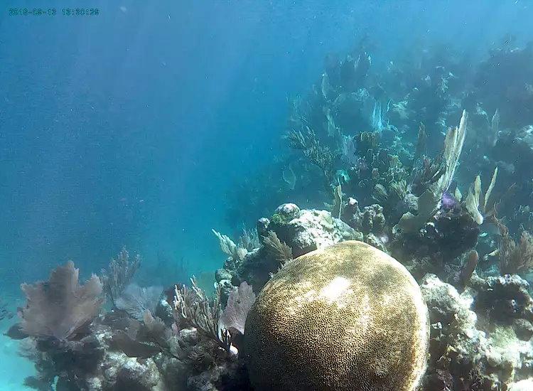 Underwater at Azul de Mar