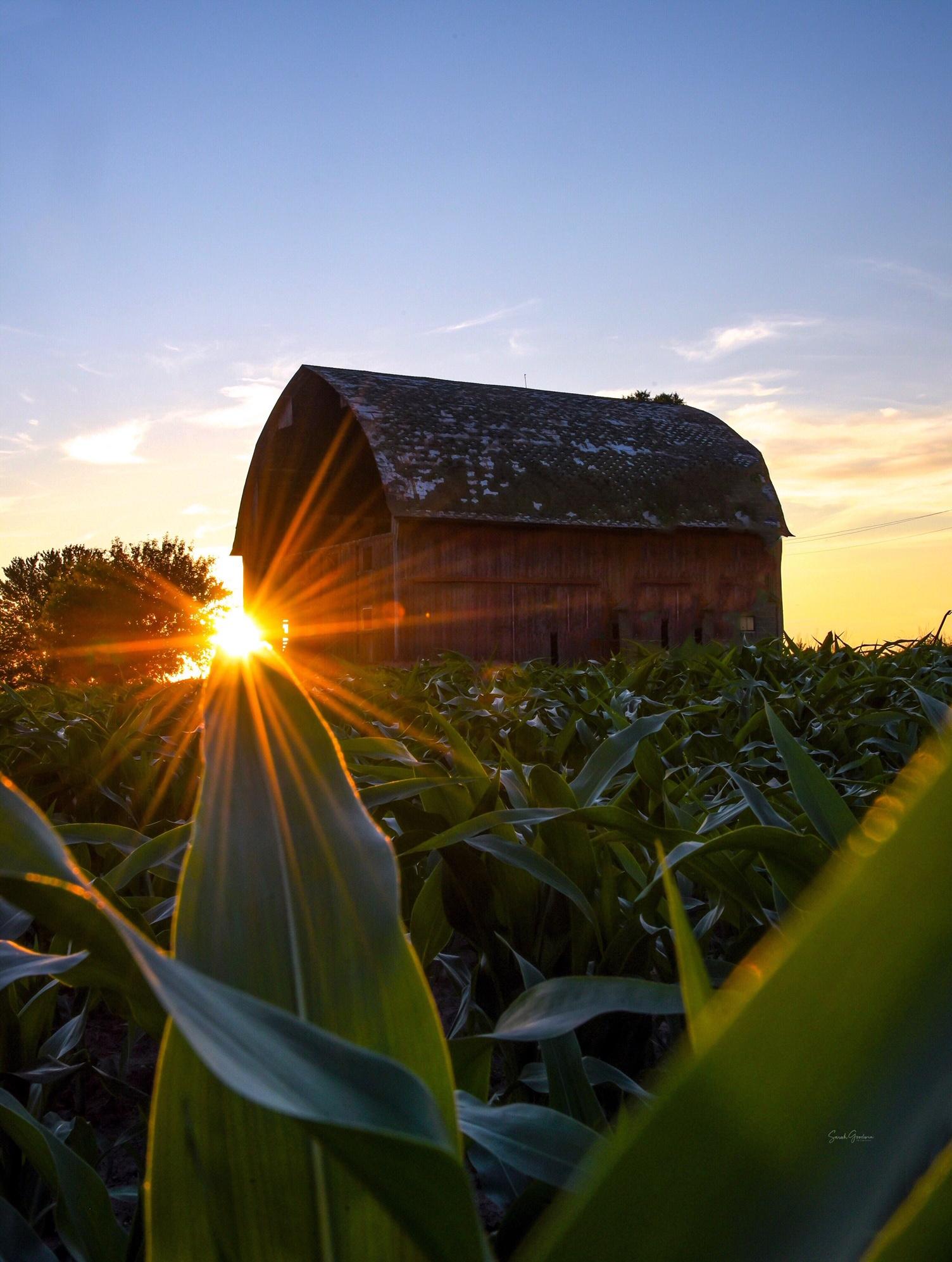 Rural Gold