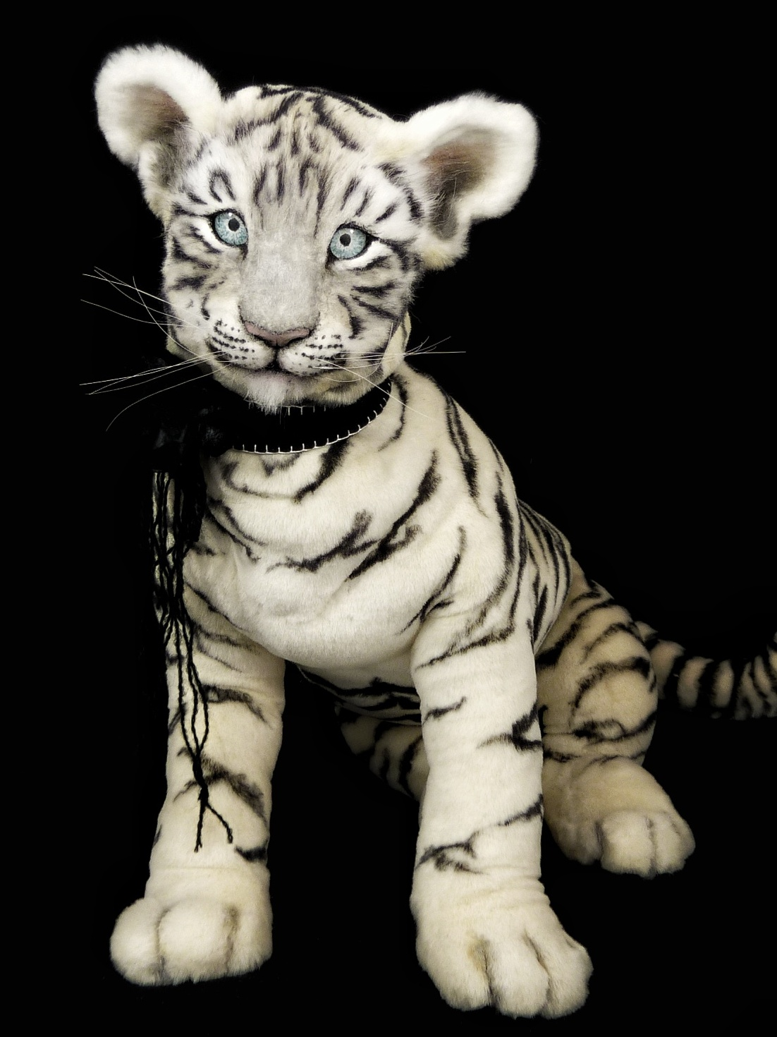 ASIA the tiger cub