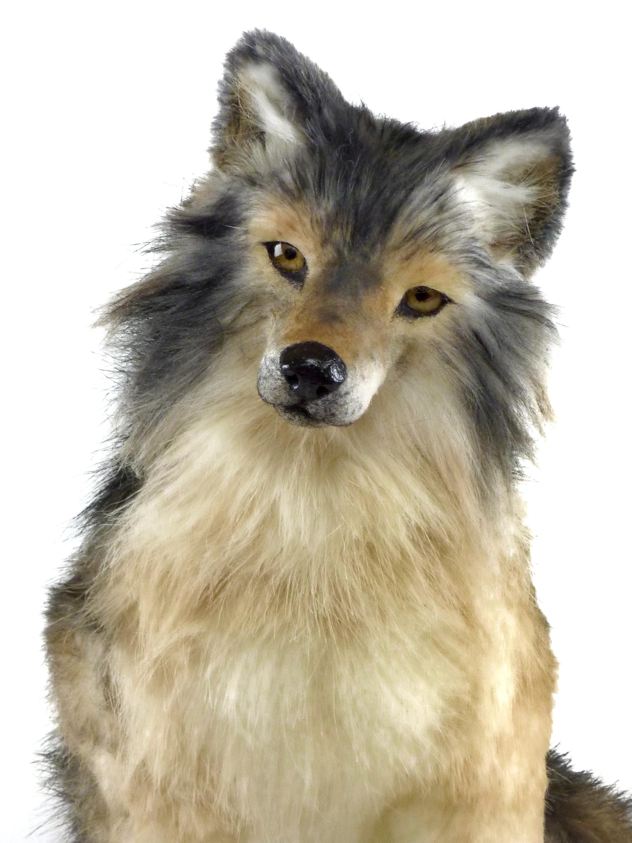 NIMBUS the wolf