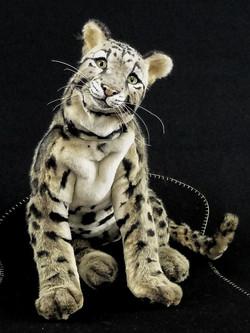 Clouded leopard NUBE