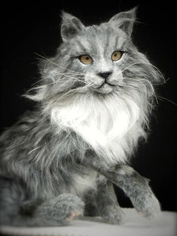 Kitten STORM