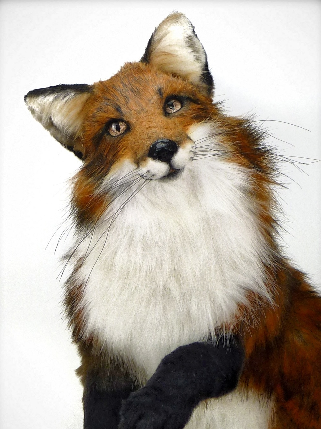 Red fox SERENDIPITY