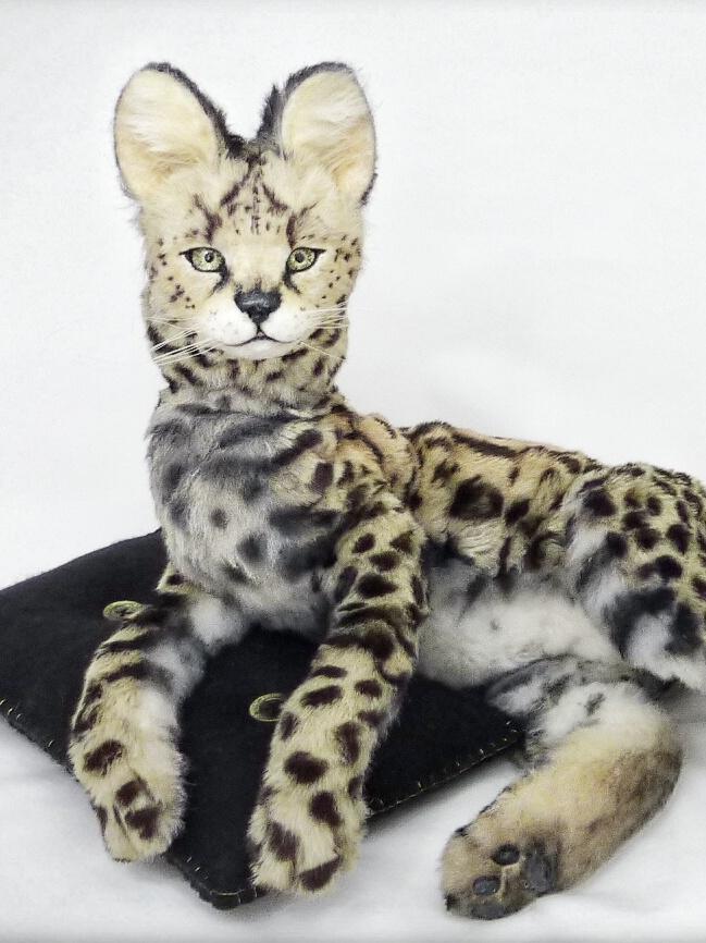 Serval cub DUSK