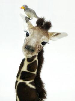 Baby giraffe MILLY)