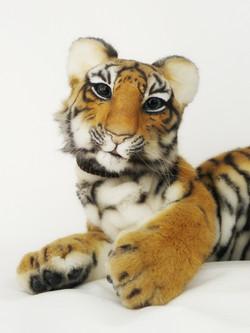 Tiger cub BLAKE
