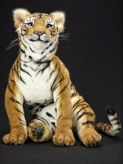 Tiger cub THUNDER