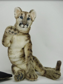 Puma cub SYRIUS
