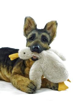German shepherd puppy ULF