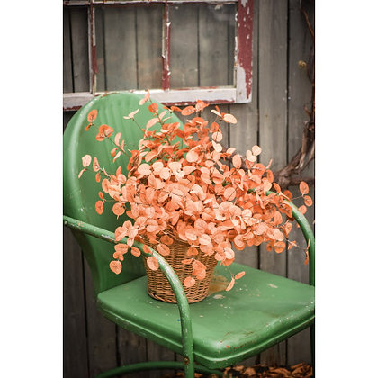 "21"" Amber Eucalyptus Bush"