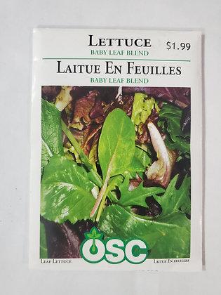 Lettuce - Baby Leaf Blend